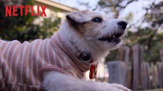 Nos amis les chiens :  bande-annonce VOST