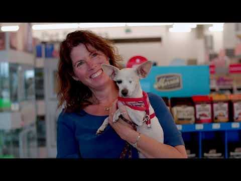 Last weekend, a one-eyed Chihuahua became the 300,000th pet to be adopted at a PetSmart store in Canada. Ellie was adopted by Hanne Olsen, who fell in love with the pint-sized rescue pup at first sight. Since 1999, PetSmart has been working with PetSmart Charities of Canada and more than 200 animal welfare organizations to bring adoptable pets into stores to help them find forever homes. This milestone was reached at an adoption event in Abbotsford, B.C. with Embrace a Discarded Animal Society.