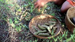 Survival skills: Find green tamarind in the forest for food #2 - Tamarind food eating delicious