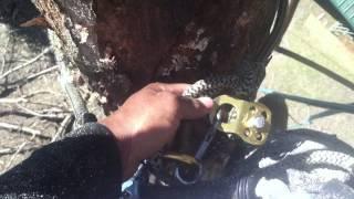 Circle of Death Explained - Tree Climber Arborist Treeman Tree Climbing
