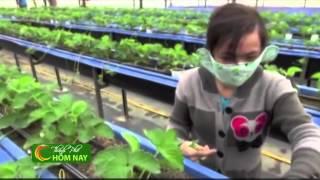 """Làm giàu bằng """"nông nghiệp đô thị"""" - Thành Phố Hôm Nay [HTV9 – 14.01.2015]"""