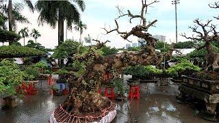 Toàn bộ triển lãm cây cảnh hội làng nghề quận Nam Từ Liêm Hà Nội 2017