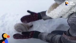 Kids Rescue Frozen Squirrel   The Dodo