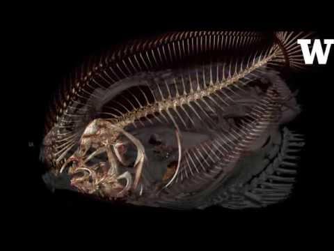 UW professor is making 3-D scans of every fish species in the sea