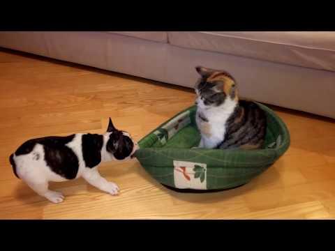 爱窝被霸占了...小狗狗奋力抢夺可是猫猫就赖着不走。太可爱了