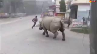 Lockdown in Nepal: Rhinoceros try to hit a man on a stre..