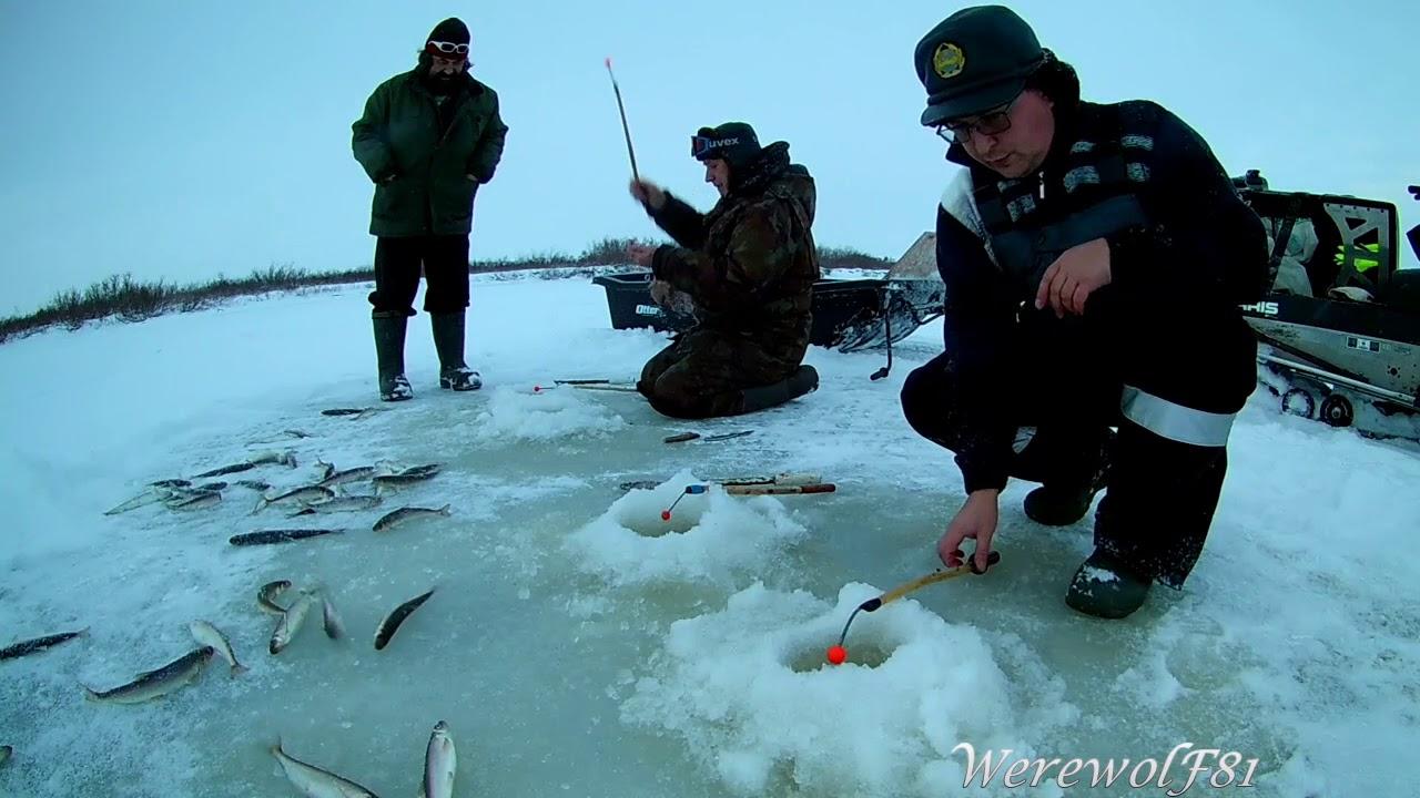 Рыбалка в нарьян маре 2019г