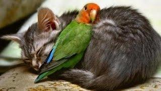 15 Amazing Animal Friendships You Won't Believe!