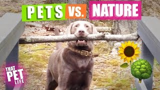 Pets vs. Nature 🌳🌝   Funny Animal Compilation