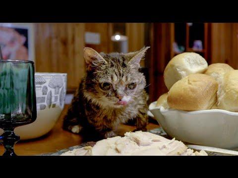 Lil BUB's Thanksgiving Feast!