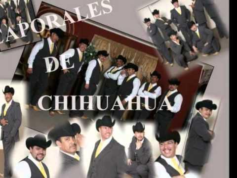 Camaron Pelao Los Caporales de Chihuahua