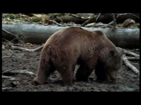 Plitvice - krajina padajúcich jazier