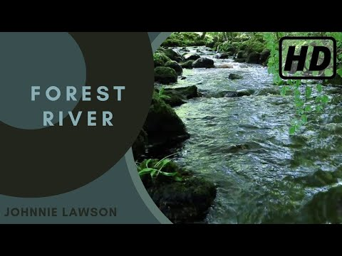 Nature Sounds of a Forest for Relaxing-Natural Soothing Sound of a Waterfall & Bird Sounds