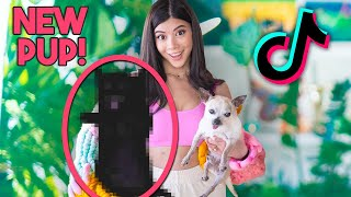 Trying Tik Tok Trends with my NEW Baby Pup🥳