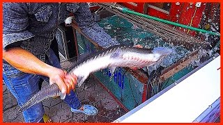 The 1.6Million Alive STURGEON Fish for Hot pot and Barbecue | Vietnamese Street Food Restaurant