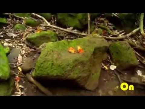 SOJA (Soldiers of Jah Army) - True Love