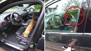 ER ZAT EEN KAT OPGESLOTEN IN MIJN AUTO!?