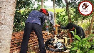 Đào hang bắt rắn: Trong nhà dân phát hiện nguyên Động Rắn Hổ Mang  Săn Bắt TV