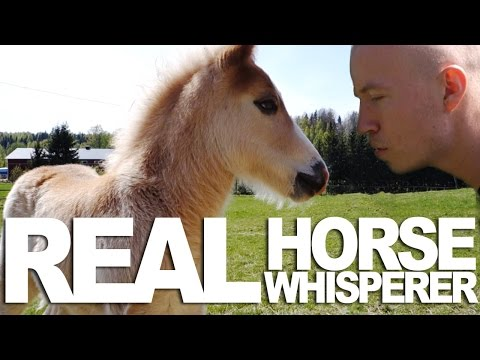 What It Really Means To Be A Horse Whisperer
