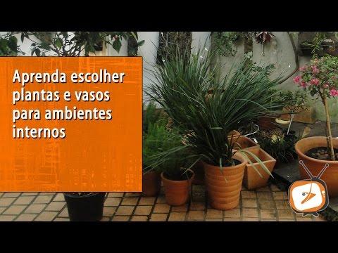 Aprenda escolher plantas e vasos para ambientes internos