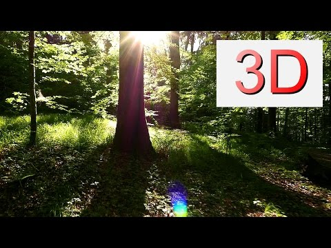 3D 4K Video 2160p: MAY FOREST WALK