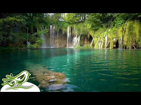 Relaxing Harp Music: Morning Music, Spa Music, Instrumental Music, Relaxing Music ★140