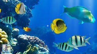 2 Hours of Beautiful Coral Reef Fish, Relaxing Ocean Fish, & Stunning Aquarium Relax Music