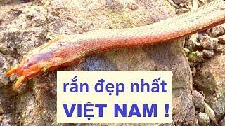 Bẫy Rắn Đẹp Nhất Việt Nam ☆ Góc Chia Sẻ