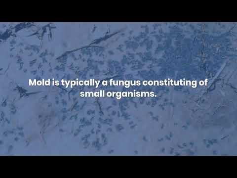 What are signs of mold in your house?