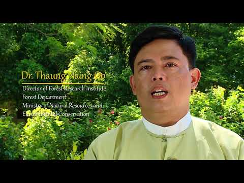 Myanmar: Role of Forests in Moving Toward Green and Sustainable Development