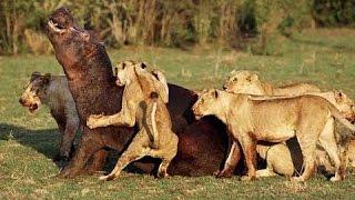 Thiên nhiên kỳ thú - Thiên nhiên hoang dã Ấn Độ - thế giới động vật