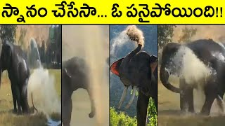 Viral Video: Elephant Taking Fountain Water Bath..