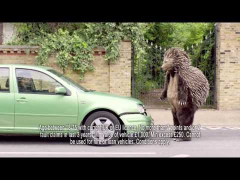 Temporary Car Insurance | Tempcover - Hedgehog Attack - Advert 2