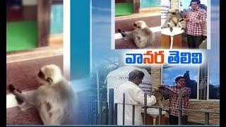 Langur visits hospital for treatment, video goes viral..