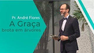 25/01/20 - A Graça brota em árvores - Pr. André Flores