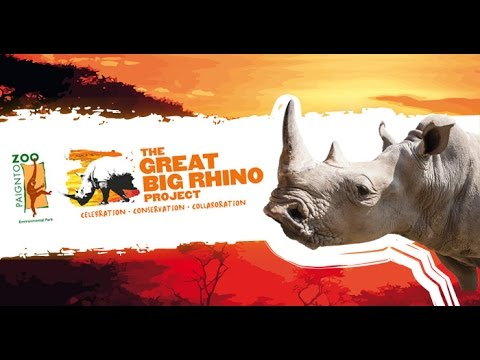 The Great Big Rhino Road Trip Great Big Rhino Parade