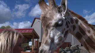See April the Giraffe up close