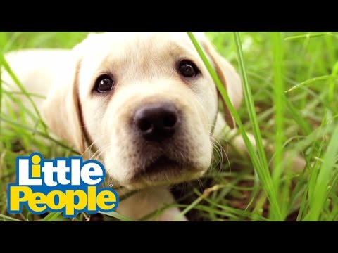 Songs for Kids - Little People | Puppy Song 🎵 Kids Songs 🎵