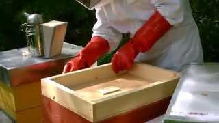 Arnia Flow Hive: come diventare apicoltori | Visita alle arnie delle api da miele