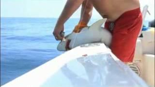 釣り上げたサメに手をかまれる