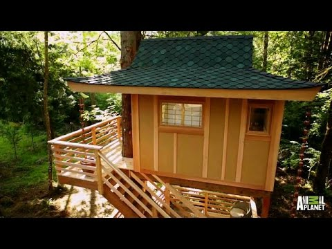 Time Lapse: Towering Treetop Teahouse | Treehouse Masters - Animal Planet  - cPJwX7EzqqM -