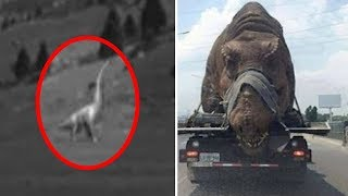 5 Dinosaurs Caught on Camera & Spotted in Real Life