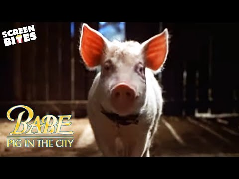 Babe: Pig in the City'