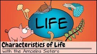 Characteristics of Life - YouTube