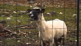 let it go screaming goat remix. (let it goat)