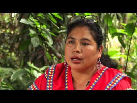 Escuchando al Bosque en Panamá. Proceso de Escucha Activa del Programa ONU-REDD – Canal Mujeres