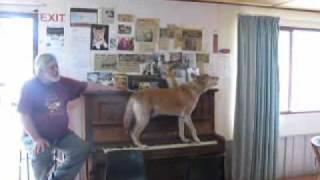 A dingo ate my pianist…