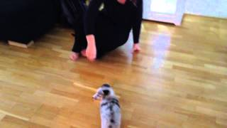 Girlfriend and another puppy surprise