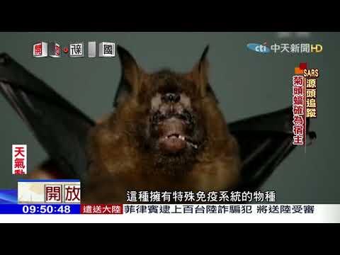 2018.01.14開放新中國/不是果子狸! SARS源頭是蝙蝠