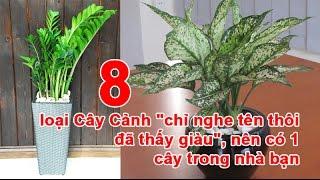 """8 loại Cây Cảnh """"chỉ nghe tên thôi đã thấy giàu"""", nên có 1 cây trong nhà bạn"""